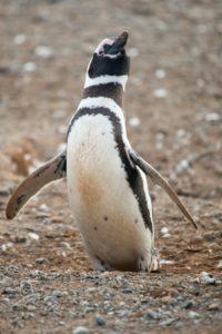 google_penguin